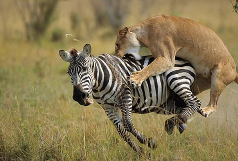 5-Things-to-do-When-you-Visit-Masai-Mara-National-Reserve
