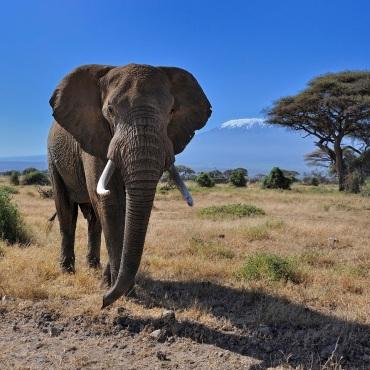 Amboseli / Tsavo