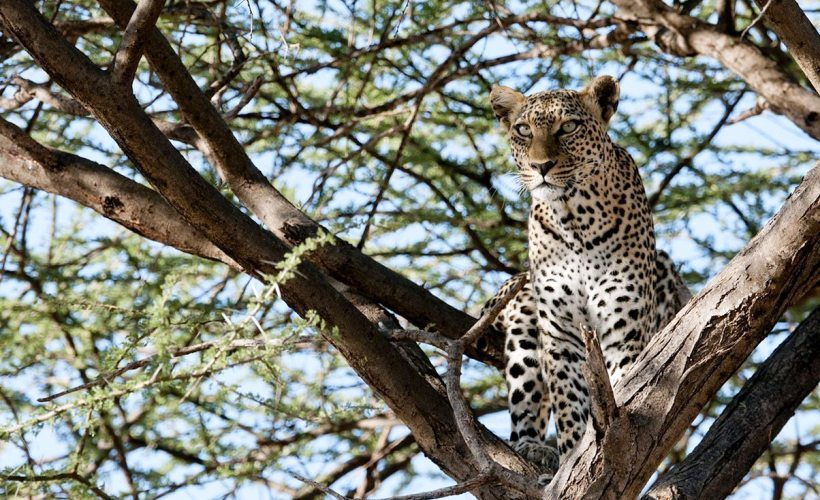 Samburu_safaris